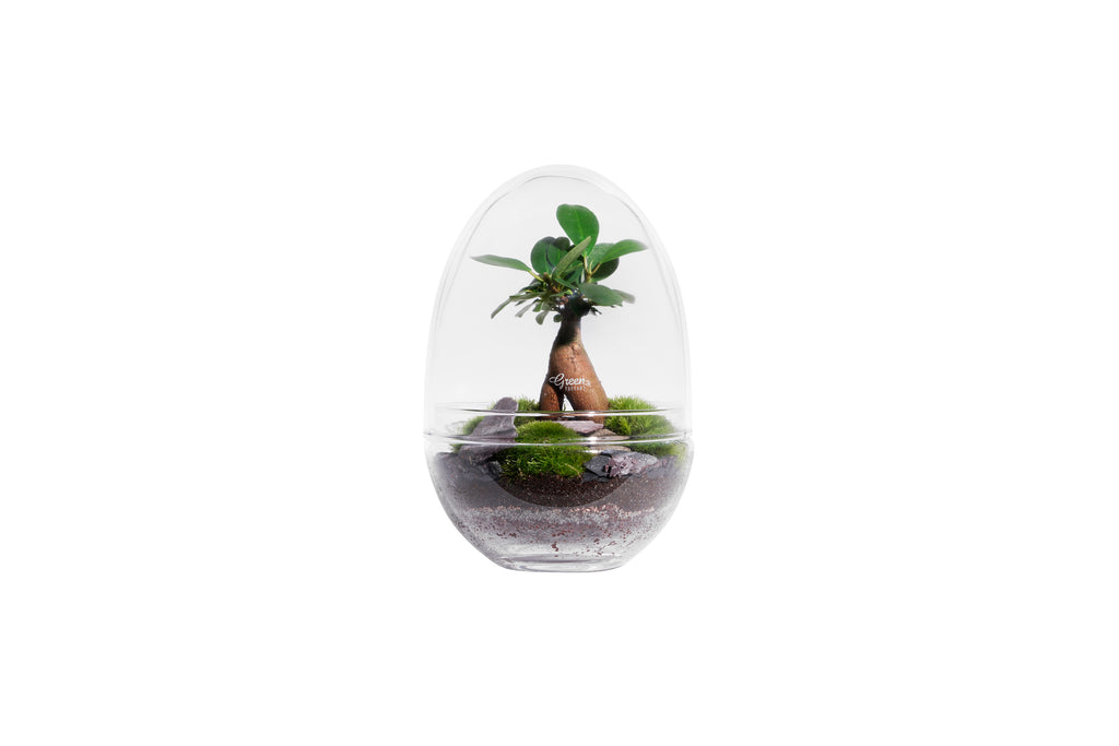 KIT TERRARIUM | CONTENANT + ELEMENTS