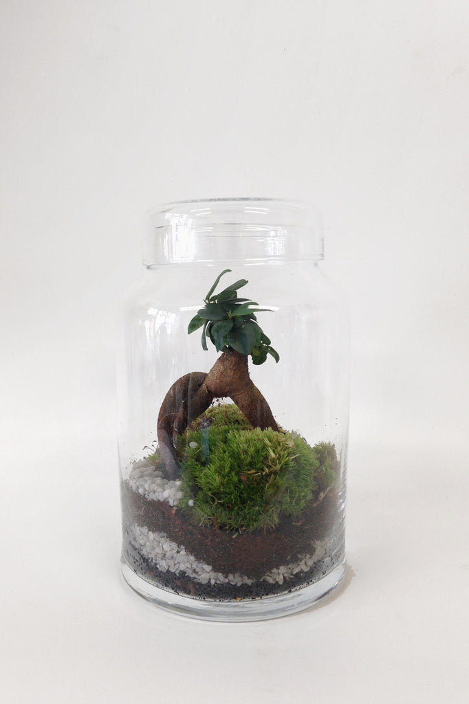 Little Garden - Terrarium humide Green Factory