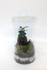 Mini Lab - Terrarium humide Green Factory