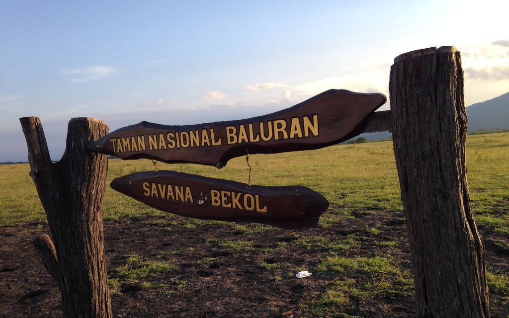 Taman Nasional Baluran, Little Africa in Java