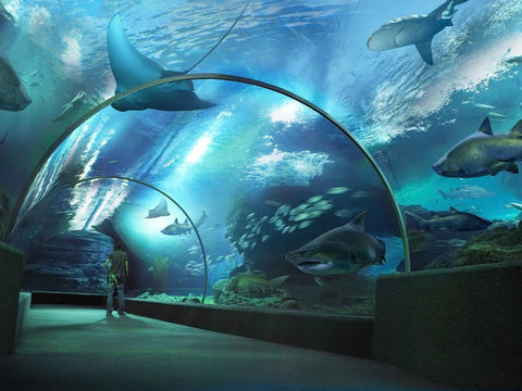 Tiket Sea Life Bangkok Ocean World murah