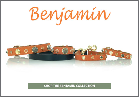 Divine Dog Benjamin Collection of Leather Dog Collars with Gemstones