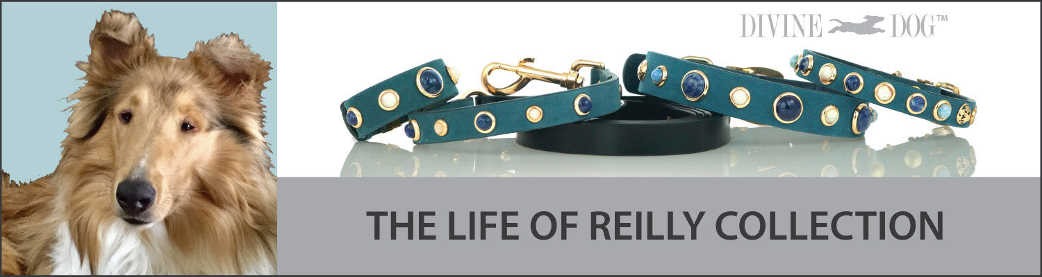 Divine Dog's The Life of Reilly Collection of Dog Collars with Gemstones