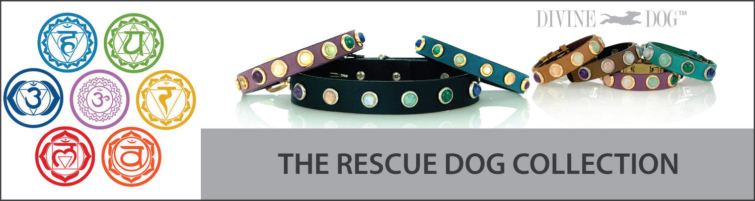 Divine Dog Rescue Dog Collars with Healing Crystals and Healing Gemstones with Companion Bracelets