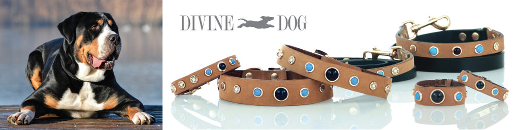 Divine Dog Gemstone Dog Collars - Gideon Collection