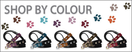 Divine Dog Stud Ready Leashes Shop by Colour
