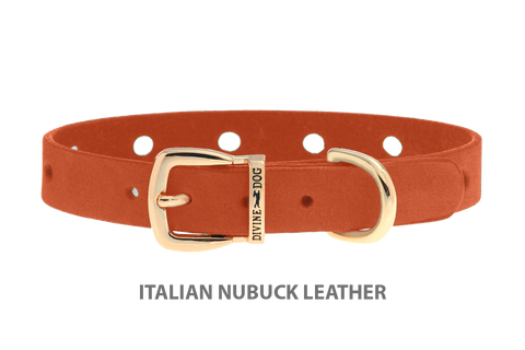 Divine Dog Collar, Nubuck Tiger Lily-Gold 1/2 inch Wide (14mm), Fits Neck 8.5 to 10 Inches