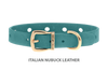 Divine Dog Collar, Nubuck Turquoise-Gold 1/2 inch Wide (14mm), Fits Neck 8.5 to 10 Inches