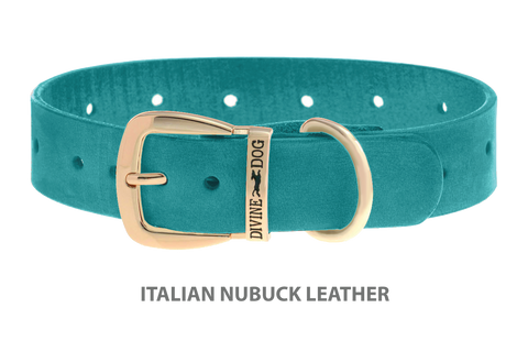 Divine Dog Stud Ready Collar, Turquoise-Nubuck with Gold Plated Buckle $24.99 to $69.99