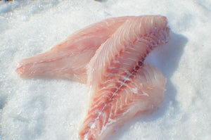 Red Snapper (Fillets) - Katies Seafood Market