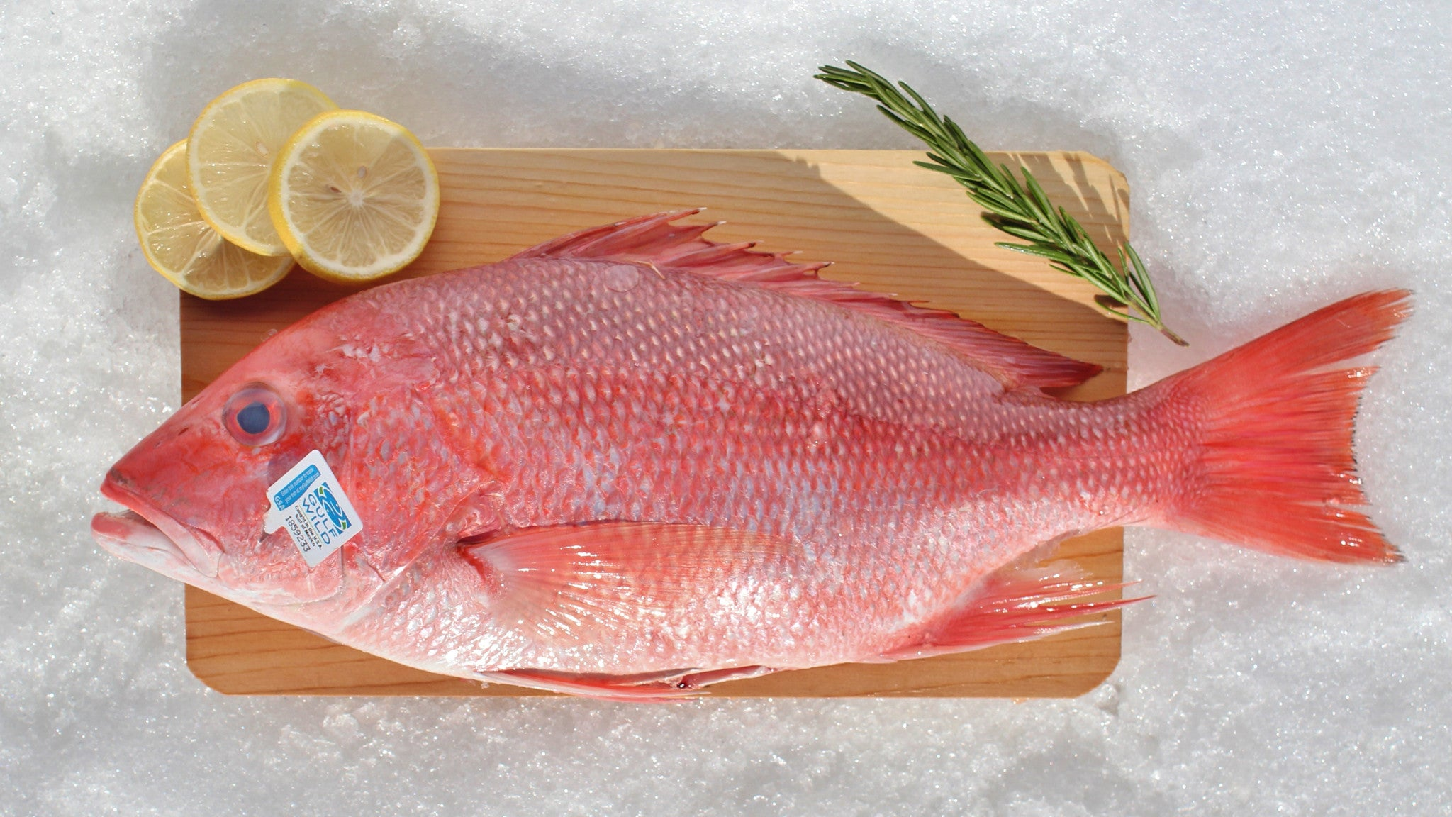 Flounder whole katies seafood market for Red snapper fishing