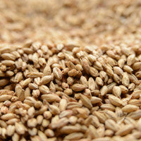 Briess Ashburne Mild Malt 1 lb
