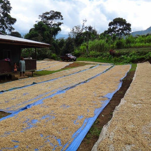 Papua New Guinea AAK Cooperative Coffee