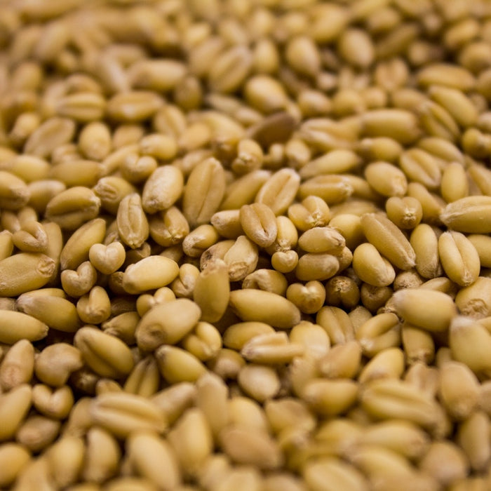 Unmalted Wheat 1 oz