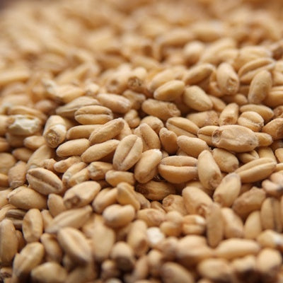 Briess White Wheat Malt 1 lb
