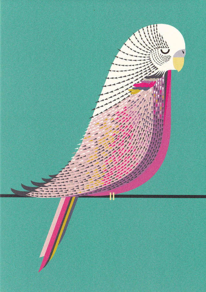 I Ended Up Here Greeting Card: Budgie