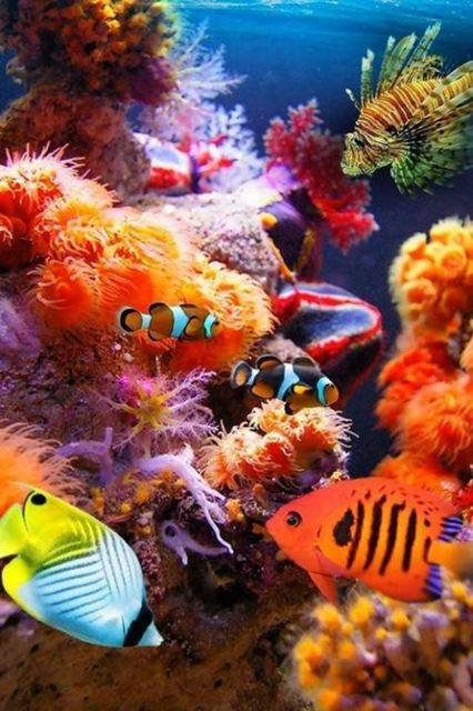 World Wildlife Day- Life below water