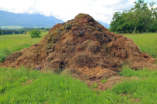 Vermiculture Language: Definitions of Worm Composting