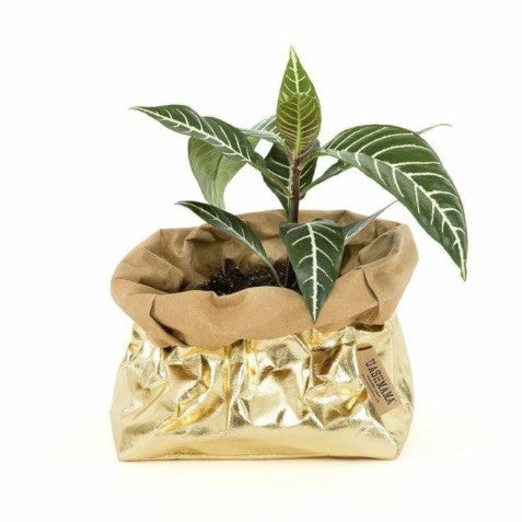 UASHMAMA Metallic Small Paper Bag Gold