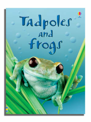 Tadpoles and Frogs - Beginners Series (Hardback) Anna Milbourne (author)