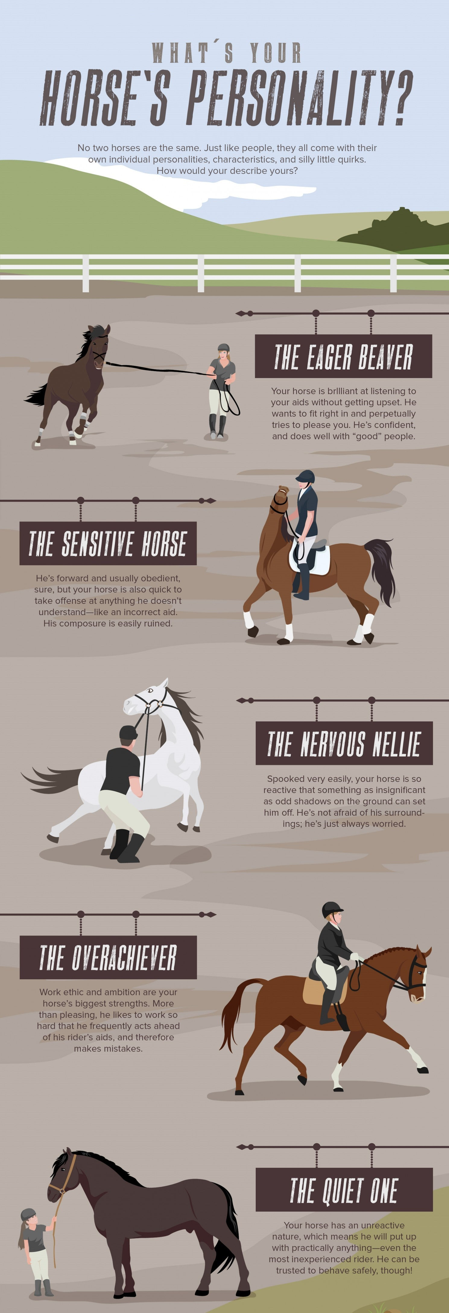 Horses Have Different Personalities