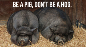 Pigs get fat, Hogs get slaughtered