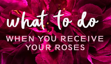 What to do when you receive your roses