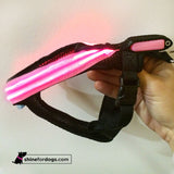 Rechargeable LED Harness - Pink/Green