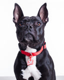 Pet Id Tag - Red Love