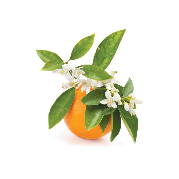 Orange Blossom, Jasmine