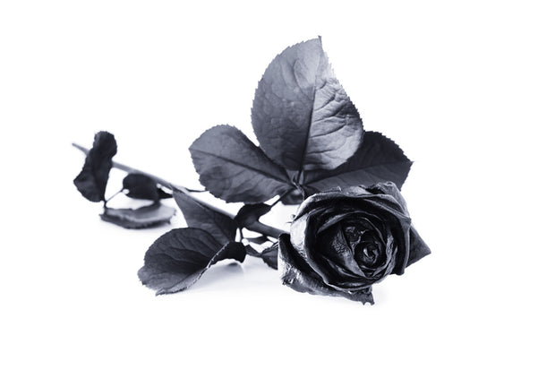 Black Rose, Turkish Rose
