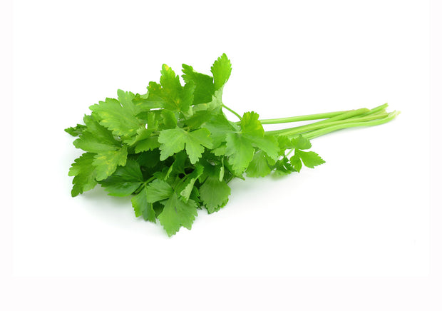 spicy coriander
