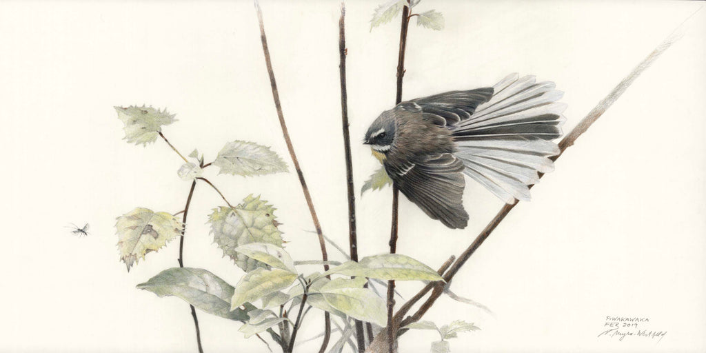 Fantail hunting insect