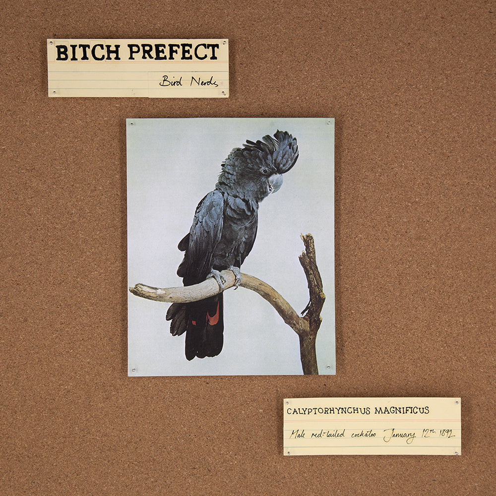 Bitch Prefect - Bird Nerds CD