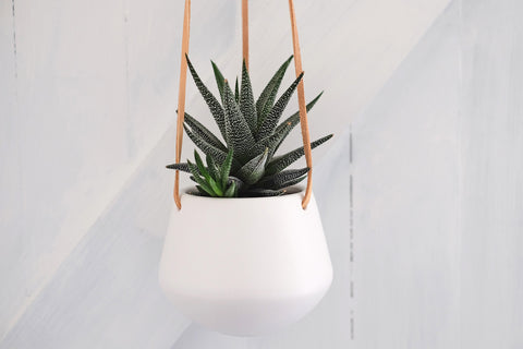 Small hanging planter : No.56, Penzance, Cornwall