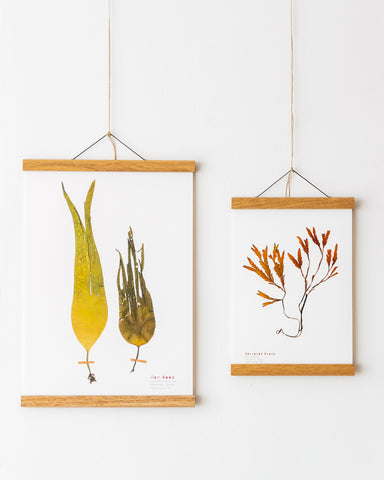 seaweed prints and oak hangers