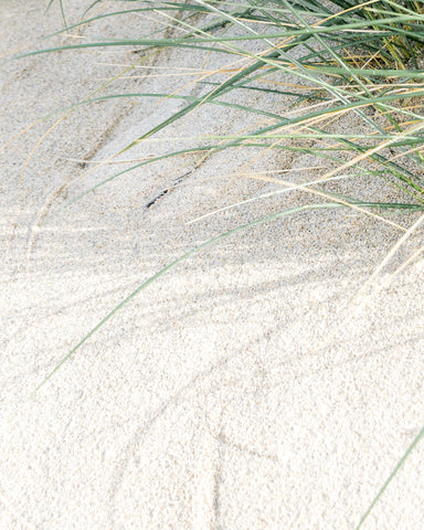 white sand and grasses