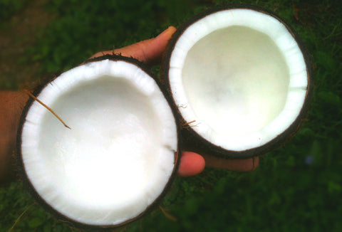 Farmer holding freshly halved coconut revealing coconut meat and coconut oil