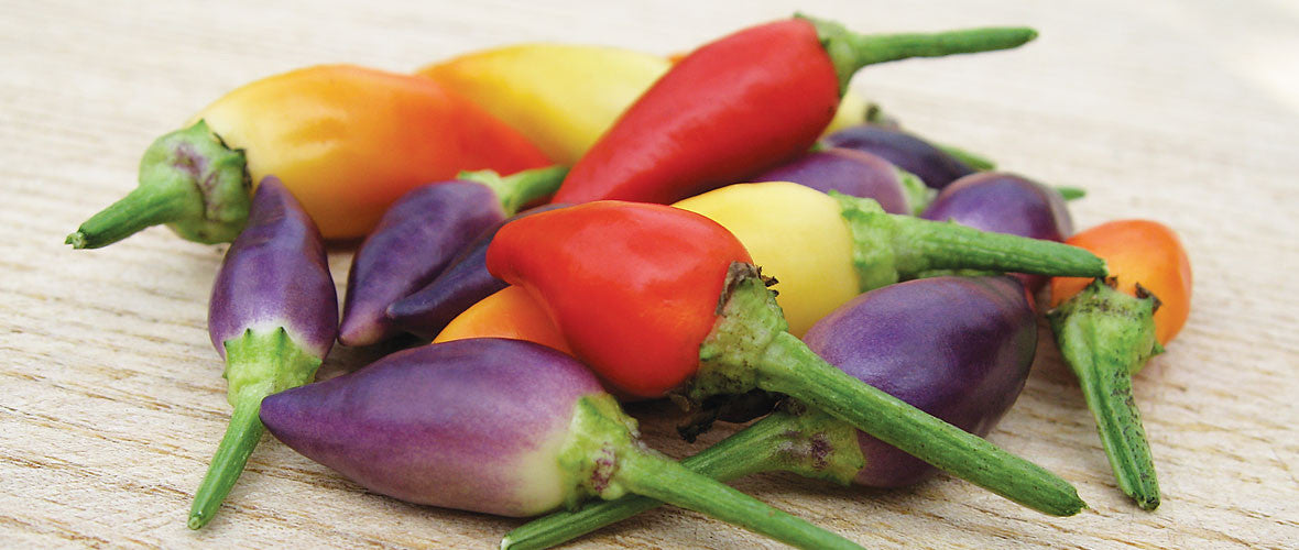 Numex Twilight Chilli Seeds