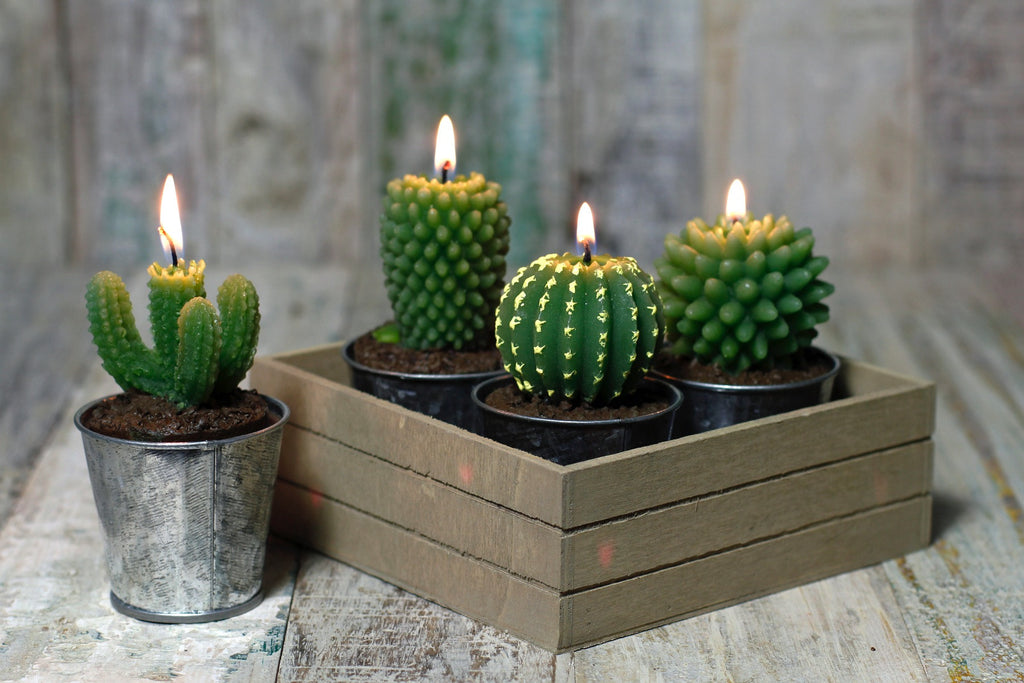 Set Of 4 Cacti Candles