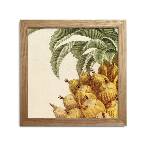 Botanical Print Pineapple