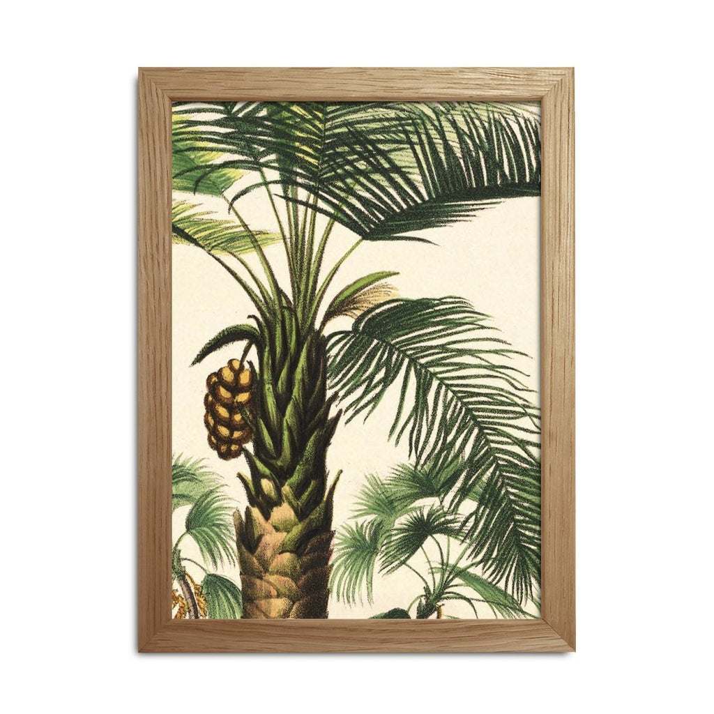 Botanical print of palm tree