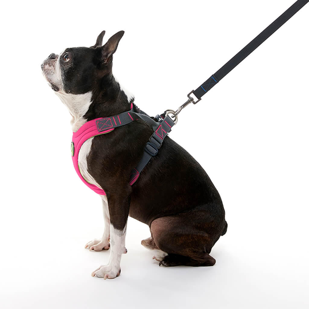 Convertible Harness