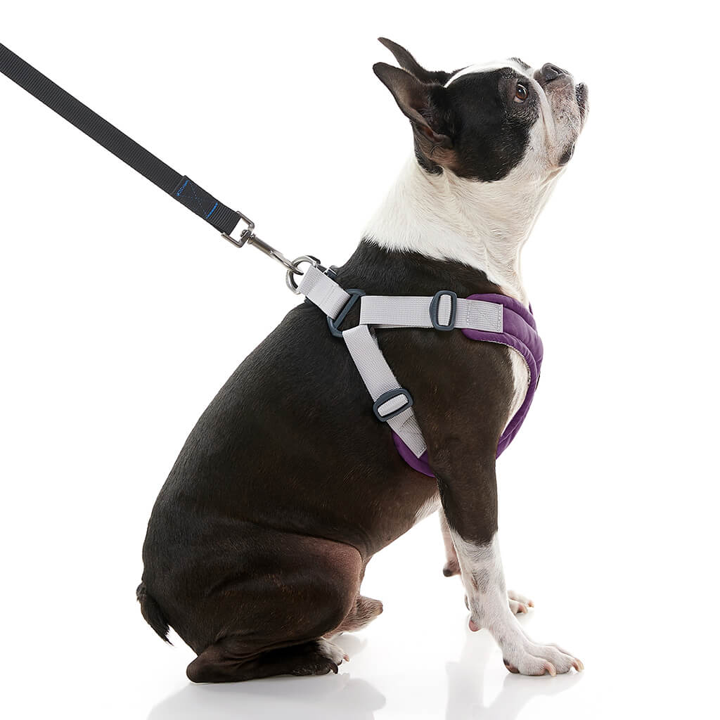 Memory Foam Step-In Harness