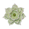 "Green Lotus Wall Flower 11.25"" (773041520736)"