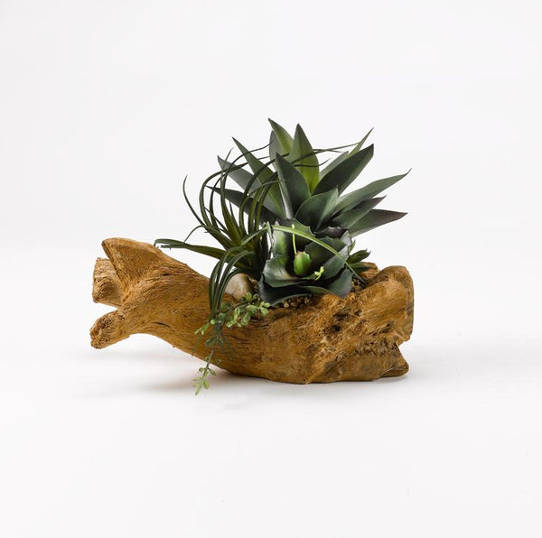 Agave plant with mixed succulents on drift wood