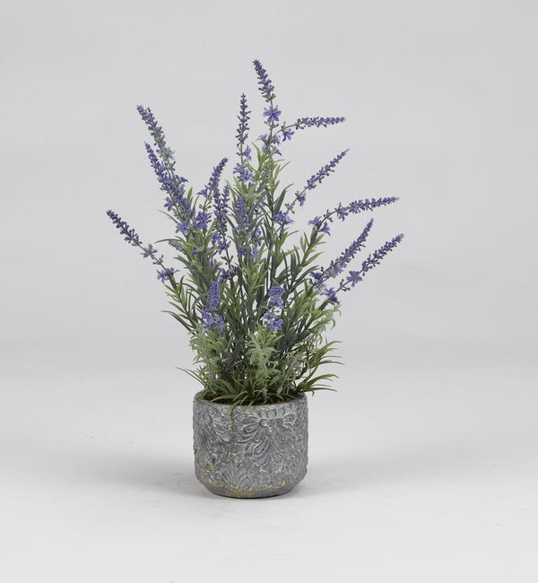 Lavender and rosemary in round cement planter - Al Rugaib Furniture (4258649276512)