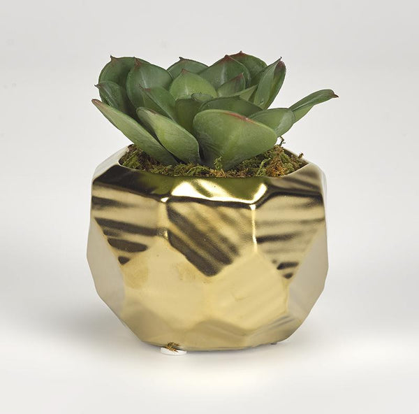 Small green echeveria in gold ceramic planter - Al Rugaib Furniture (4257235107936)
