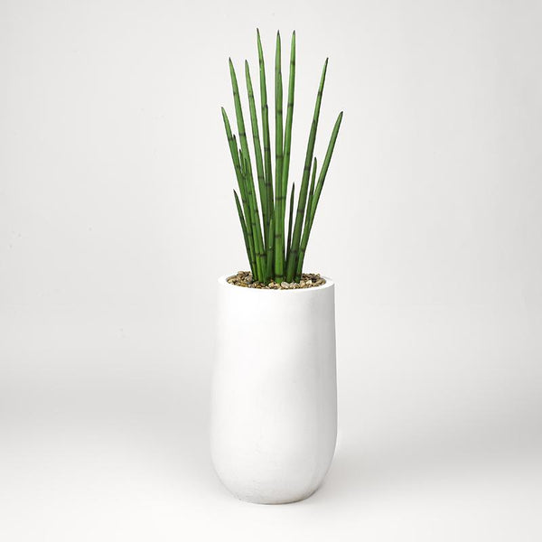 Snake plant in round white planter