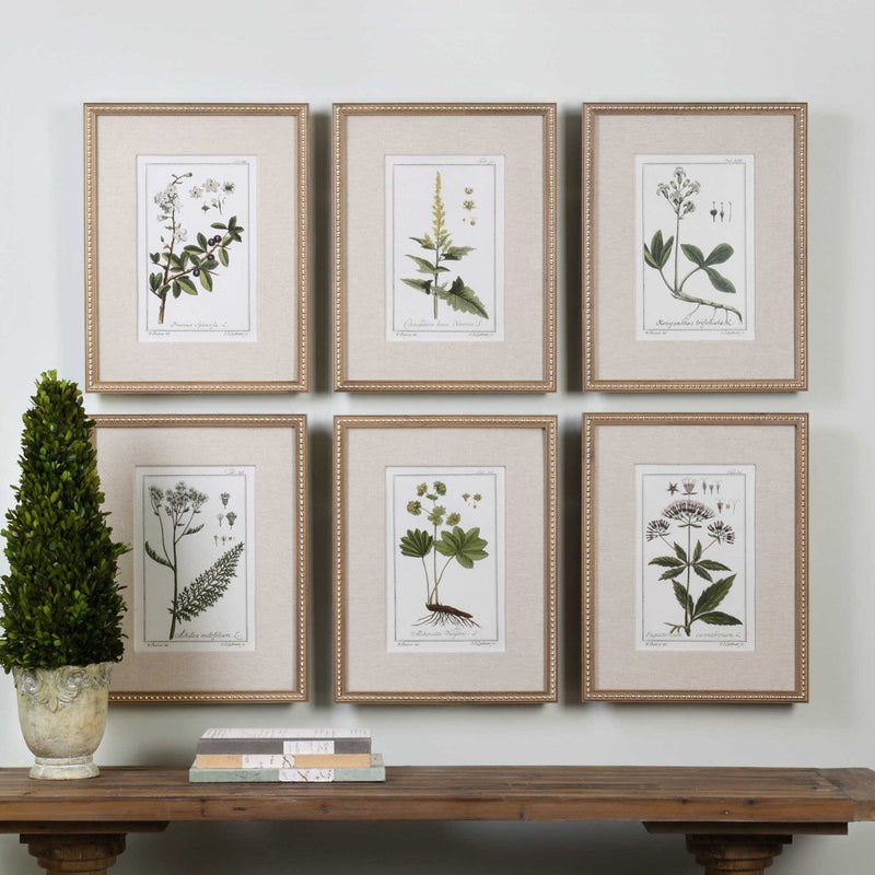 GREEN FLORAL BOTANICAL STUDY FRAMED PRINTS, S/6 (4489858809952)